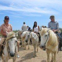 Pferdeausritt in der Camargue