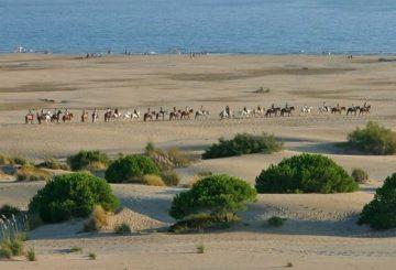 Balades à cheval sur le plage de l'Espiguette