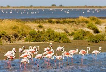 Pink flamingos on salt lagoons