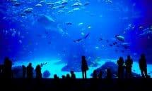 Visite de l'Aquarium de Montpellier Mare Nostrum