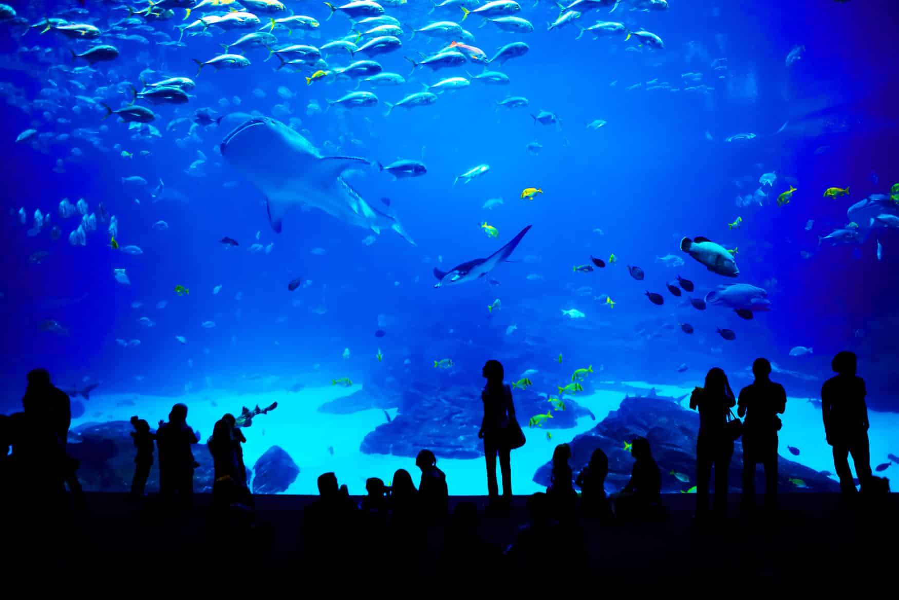 a visit to the aquarium Kids visit to the aquarium/fun sea animals and huge moving dinosaurs /shark,alligator,stingray/ - duration: 10:04 kids z fun 213,125 views 10:04.